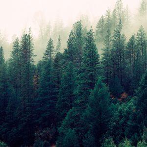 foto foresta